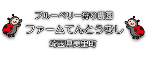 ブルーベリー狩り埼玉県美里町 |ファームてんとうむし